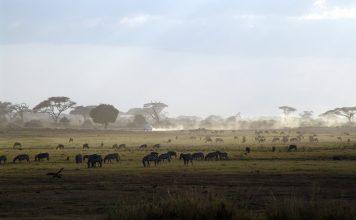 קניה – הספארי הגדול ביותר